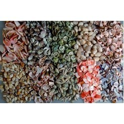 shell beads and snail beads